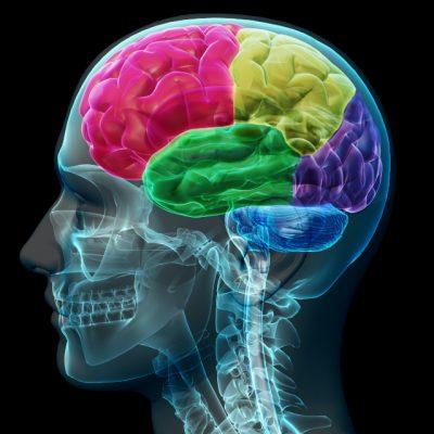 L'intelligence émotionnelle existe t-elle? 1