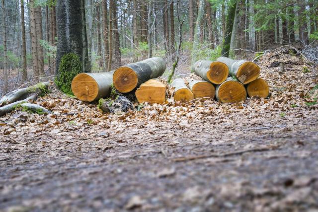 Gestion des coupes dans les forêts