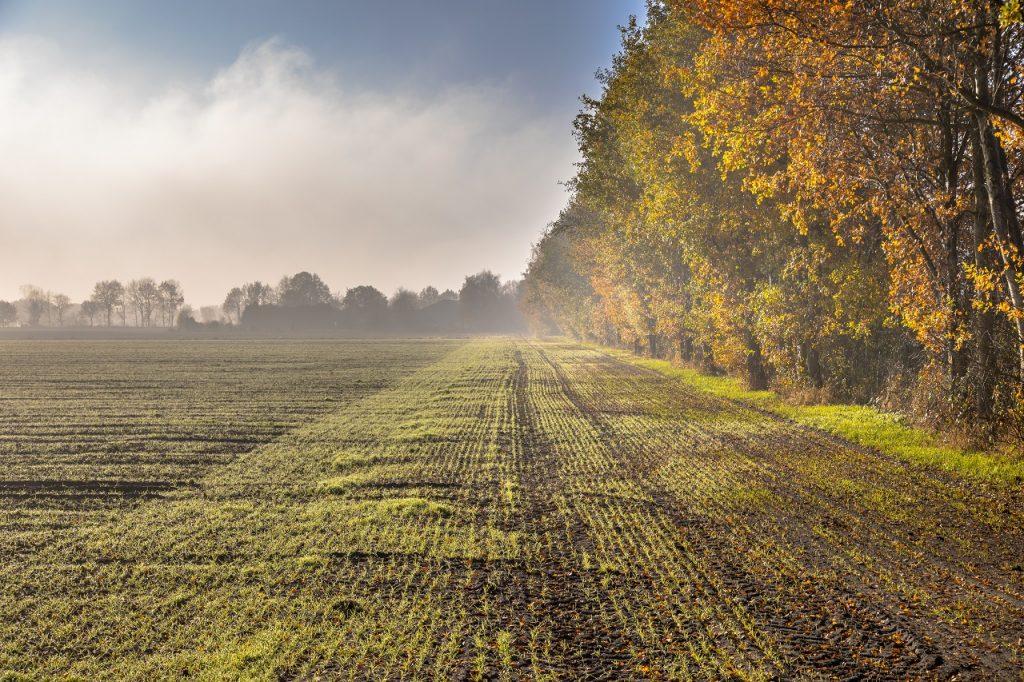 Paysage-agricole-de-novembre-brumeux