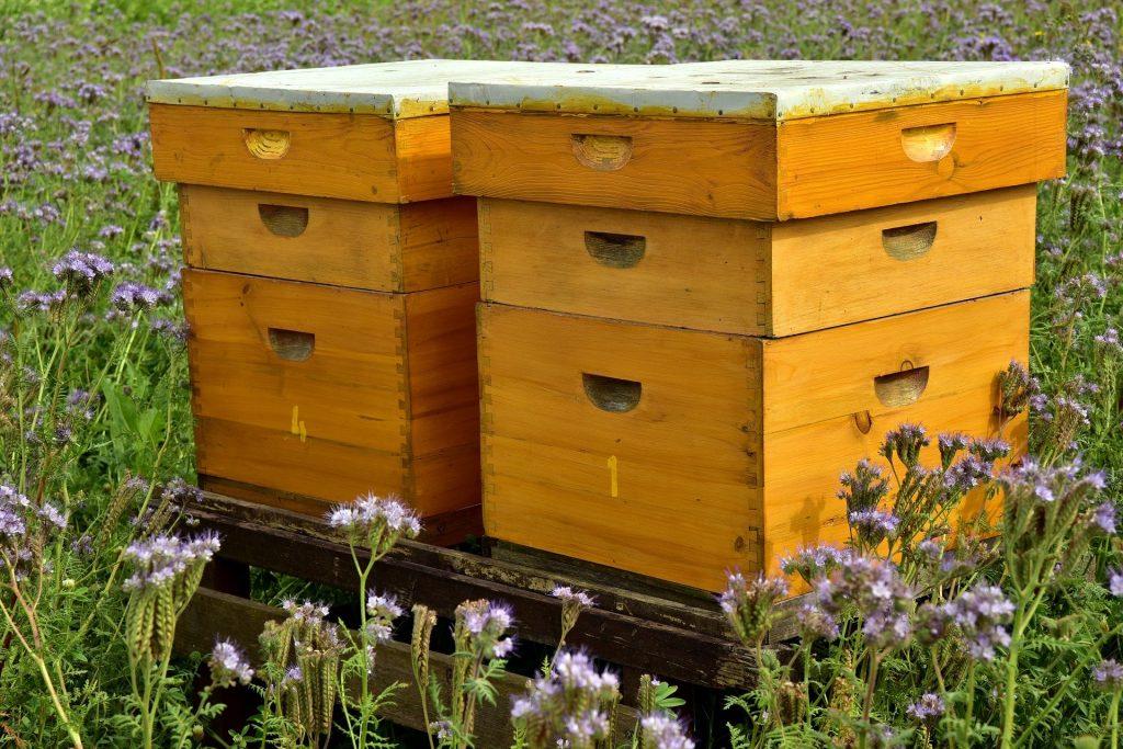 installer des ruches dans son jardin